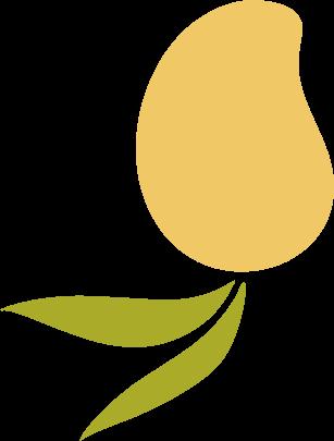 Yellow Mango Illustration Asset